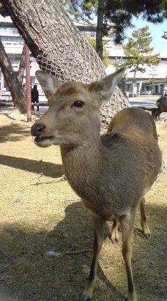 鹿吠える100224_1140~01.jpg